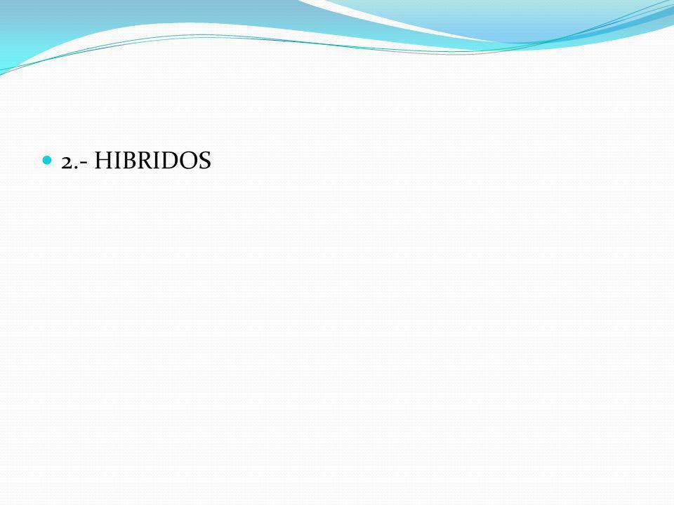 B.- LINEAS PATERNAS