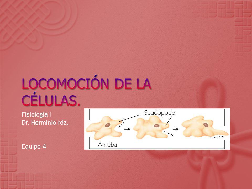 Fisiología I Dr. Herminio rdz. Equipo 4