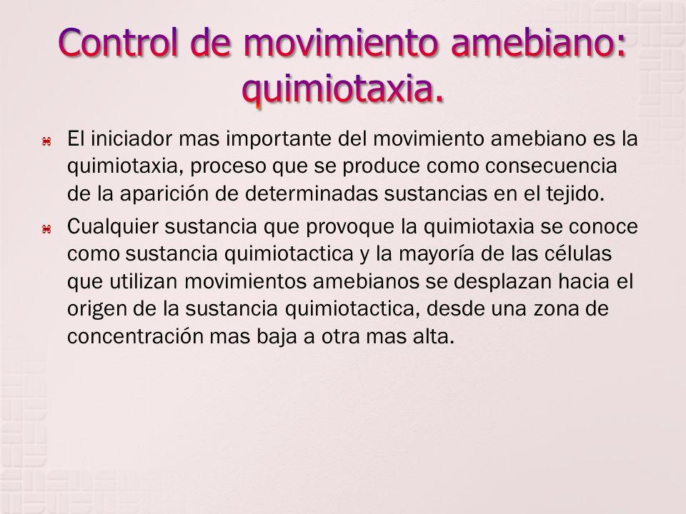 El iniciador mas importante del movimiento amebiano es la quimiotaxia, proceso que se produce como consecuencia de la aparición de determinadas sustan