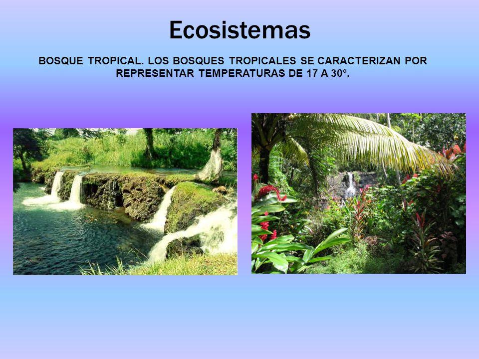Ecosistemas BOSQUE TROPICAL. LOS BOSQUES TROPICALES SE CARACTERIZAN POR REPRESENTAR TEMPERATURAS DE 17 A 30°.