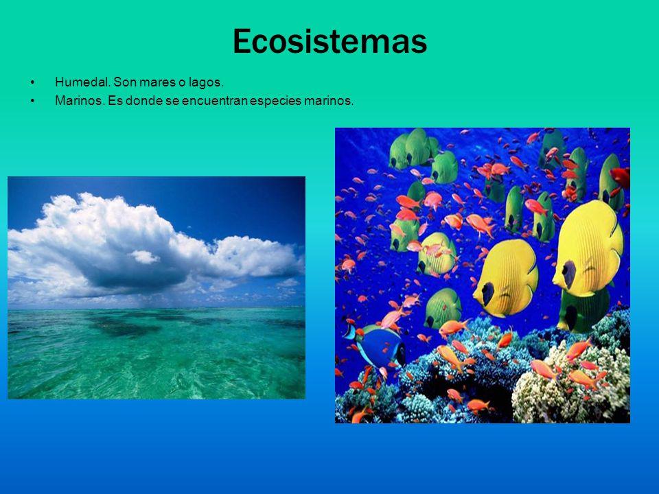 Ecosistemas Humedal. Son mares o lagos. Marinos. Es donde se encuentran especies marinos.