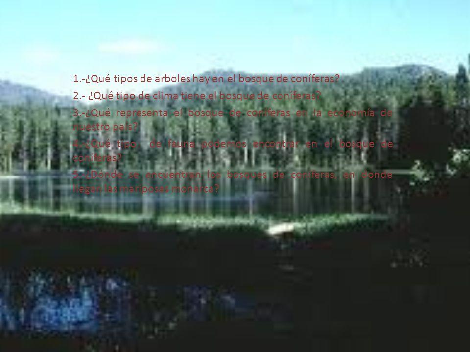 1.-¿Qué tipos de arboles hay en el bosque de coníferas? 2.- ¿Qué tipo de clima tiene el bosque de coníferas? 3.-¿Qué representa el bosque de coníferas