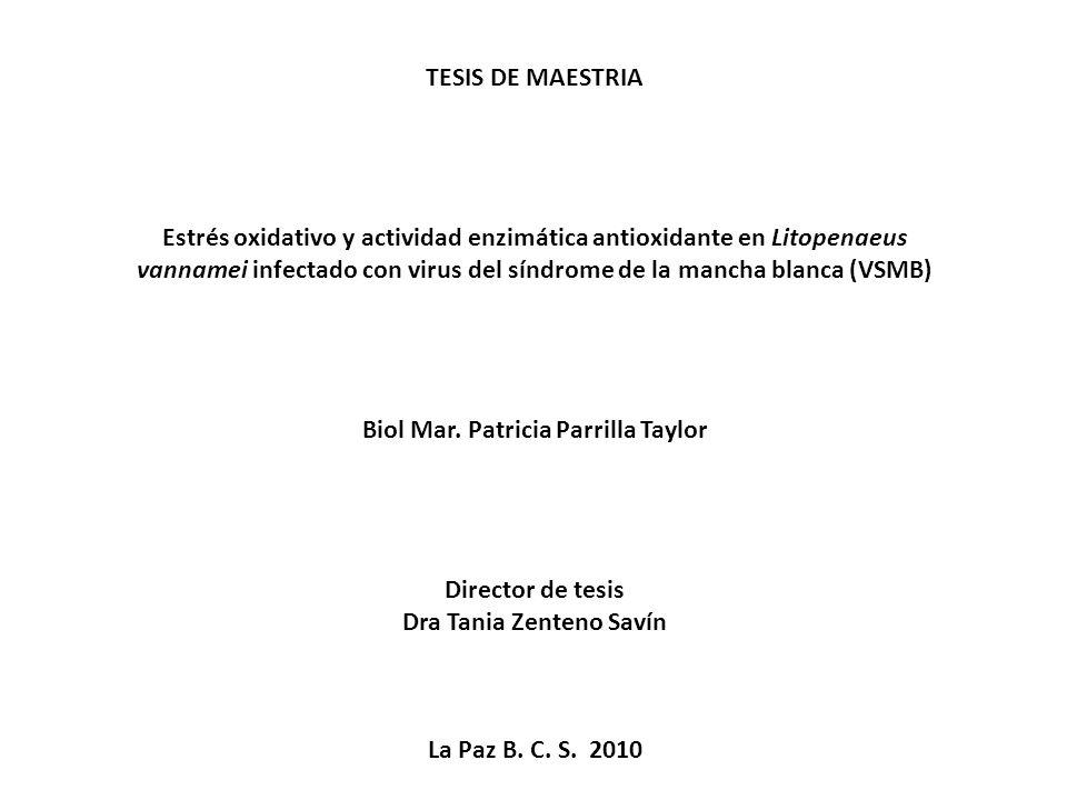 TESIS DE MAESTRIA Estrés oxidativo y actividad enzimática antioxidante en Litopenaeus vannamei infectado con virus del síndrome de la mancha blanca (V