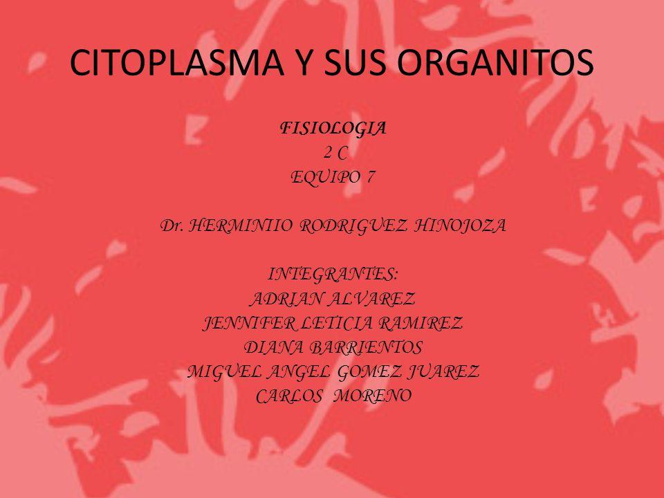 CITOPLASMA Y SUS ORGANITOS FISIOLOGIA 2 C EQUIPO 7 Dr. HERMINIIO RODRIGUEZ HINOJOZA INTEGRANTES: ADRIAN ALVAREZ JENNIFER LETICIA RAMIREZ DIANA BARRIEN