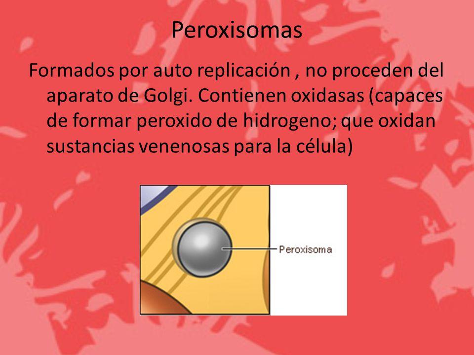 Peroxisomas Formados por auto replicación, no proceden del aparato de Golgi. Contienen oxidasas (capaces de formar peroxido de hidrogeno; que oxidan s