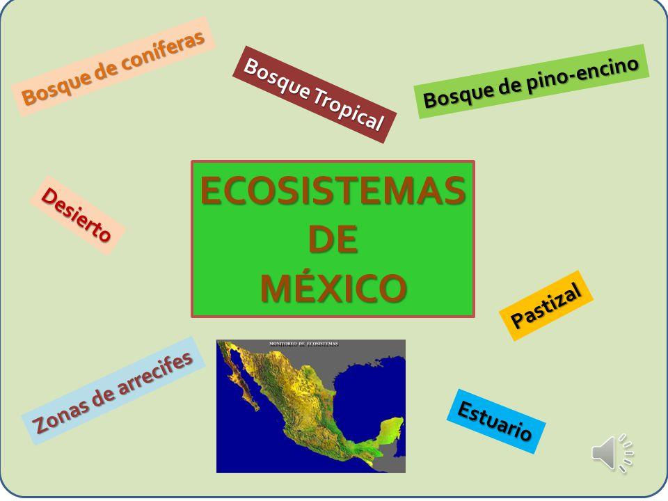 ECOSISTEMASDEMÉXICO Bosque de coníferas Bosque de pino-encino Bosque Tropical Desierto Pastizal Estuario Zonas de arrecifes