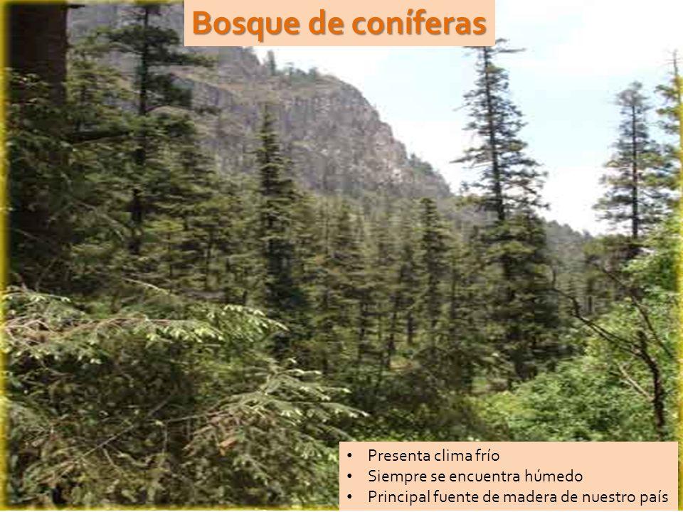 Bosque de coníferas Presenta clima frío Siempre se encuentra húmedo Principal fuente de madera de nuestro país