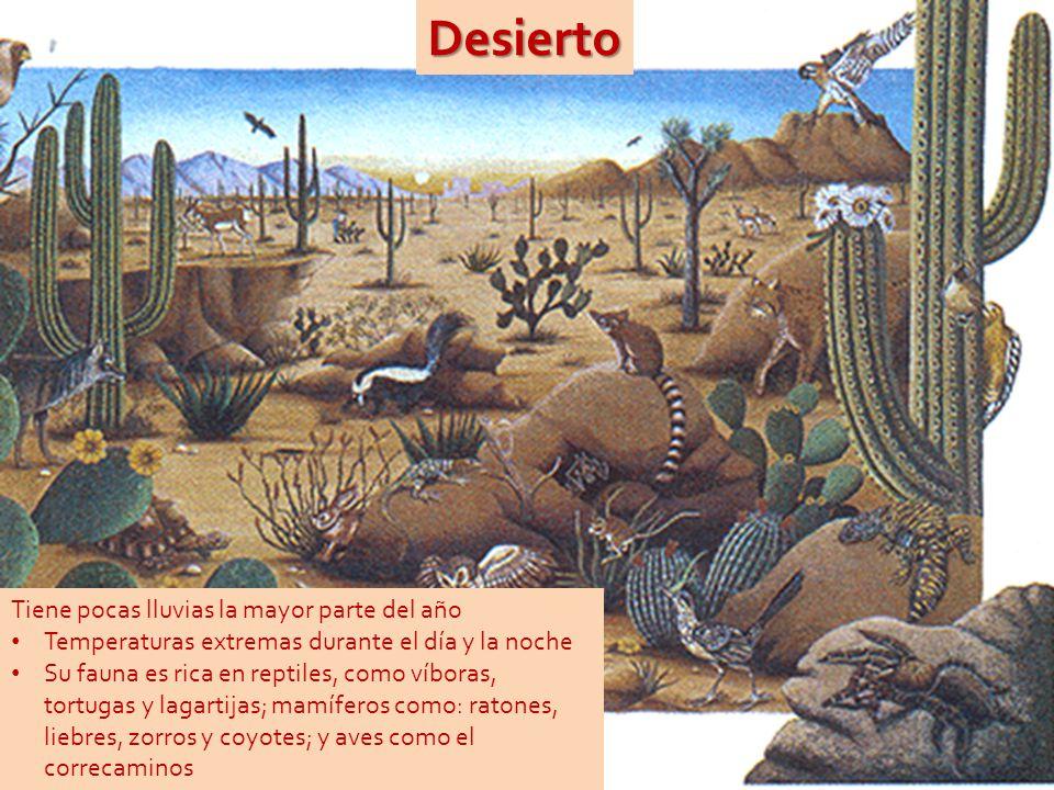 Desierto Tiene pocas lluvias la mayor parte del año Temperaturas extremas durante el día y la noche Su fauna es rica en reptiles, como víboras, tortugas y lagartijas; mamíferos como: ratones, liebres, zorros y coyotes; y aves como el correcaminos