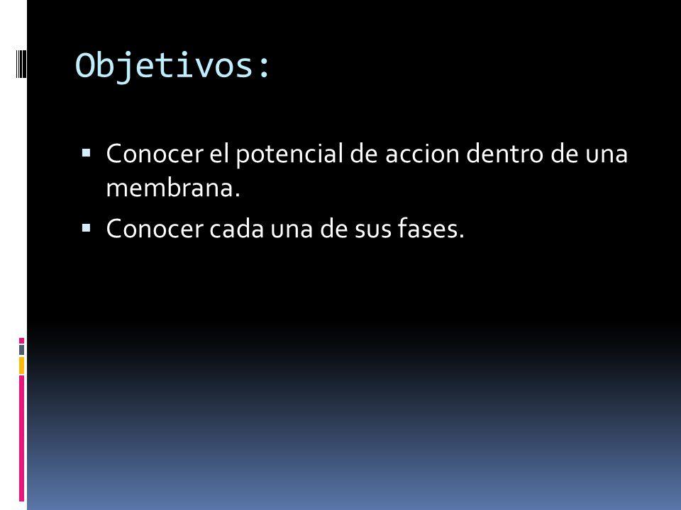 Objetivos: Conocer el potencial de accion dentro de una membrana. Conocer cada una de sus fases.