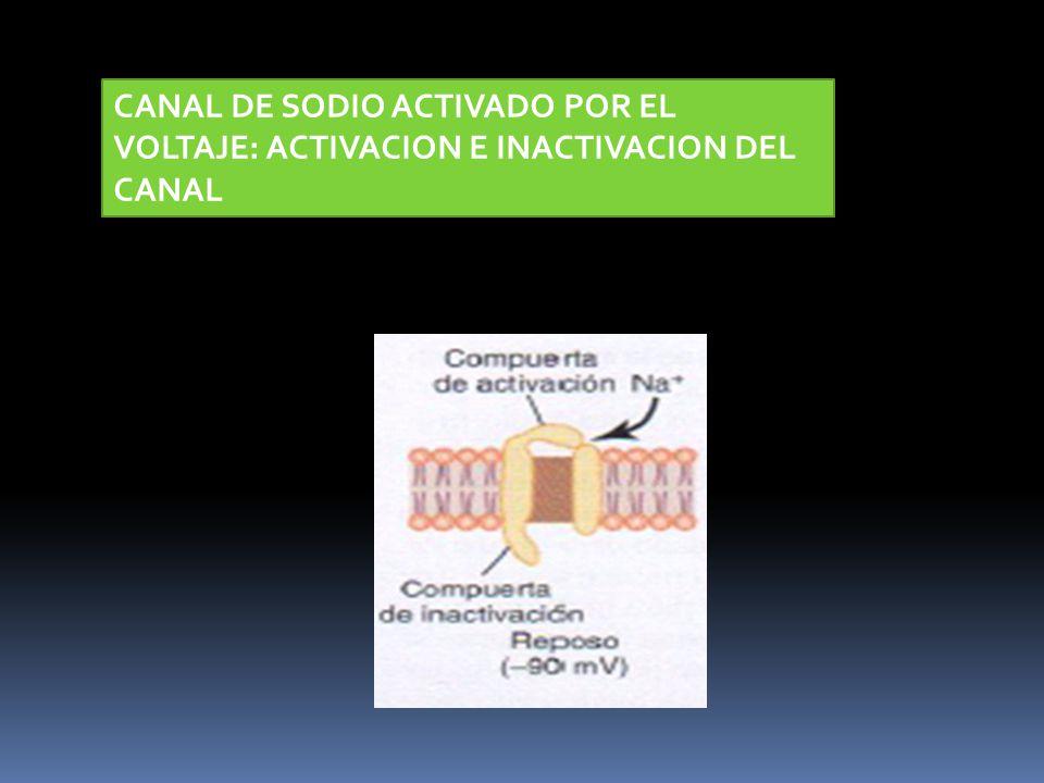 CANAL DE SODIO ACTIVADO POR EL VOLTAJE: ACTIVACION E INACTIVACION DEL CANAL