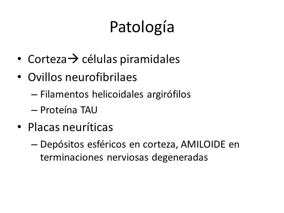 Patología Corteza células piramidales Ovillos neurofibrilaes – Filamentos helicoidales argirófilos – Proteína TAU Placas neuríticas – Depósitos esféri