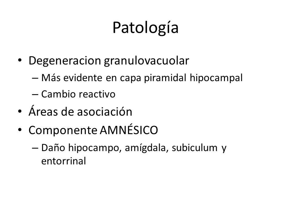 Patología Degeneracion granulovacuolar – Más evidente en capa piramidal hipocampal – Cambio reactivo Áreas de asociación Componente AMNÉSICO – Daño hi