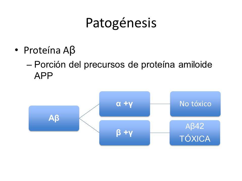 Patogénesis Proteína A β –Porción del precursos de proteína amiloide APP Aβα +γ No tóxico β +γ A β42 TÓXICA
