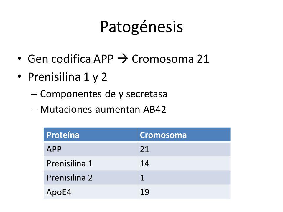 Patogénesis Gen codifica APP Cromosoma 21 Prenisilina 1 y 2 – Componentes de γ secretasa – Mutaciones aumentan AB42 ProteínaCromosoma APP21 Prenisilin