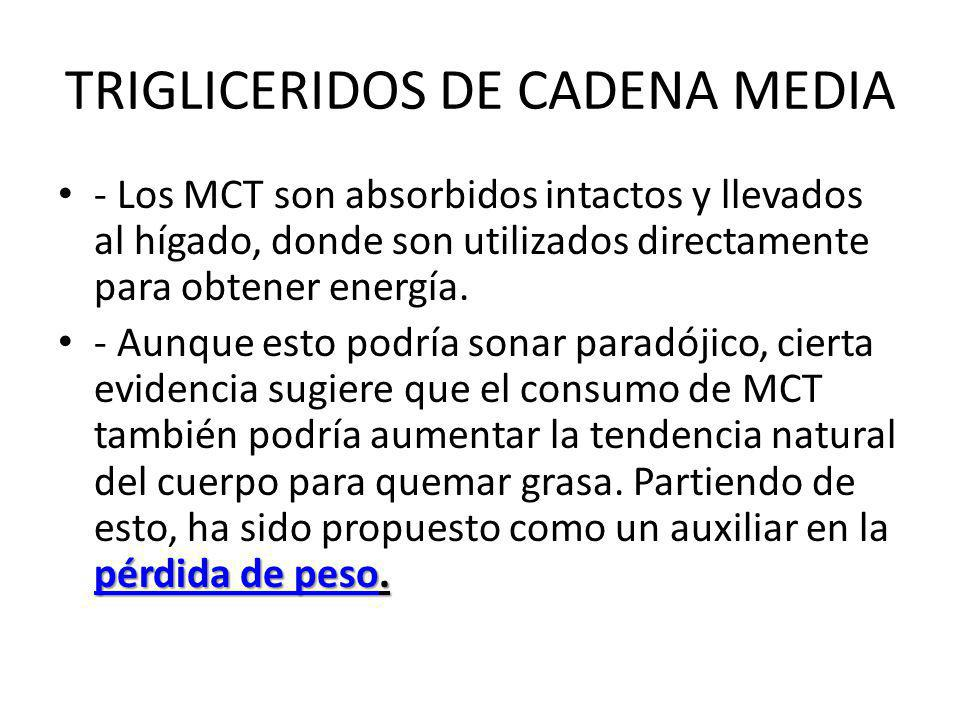 TRIGLICERIDOS DE CADENA MEDIA - Los MCT son absorbidos intactos y llevados al hígado, donde son utilizados directamente para obtener energía. pérdida