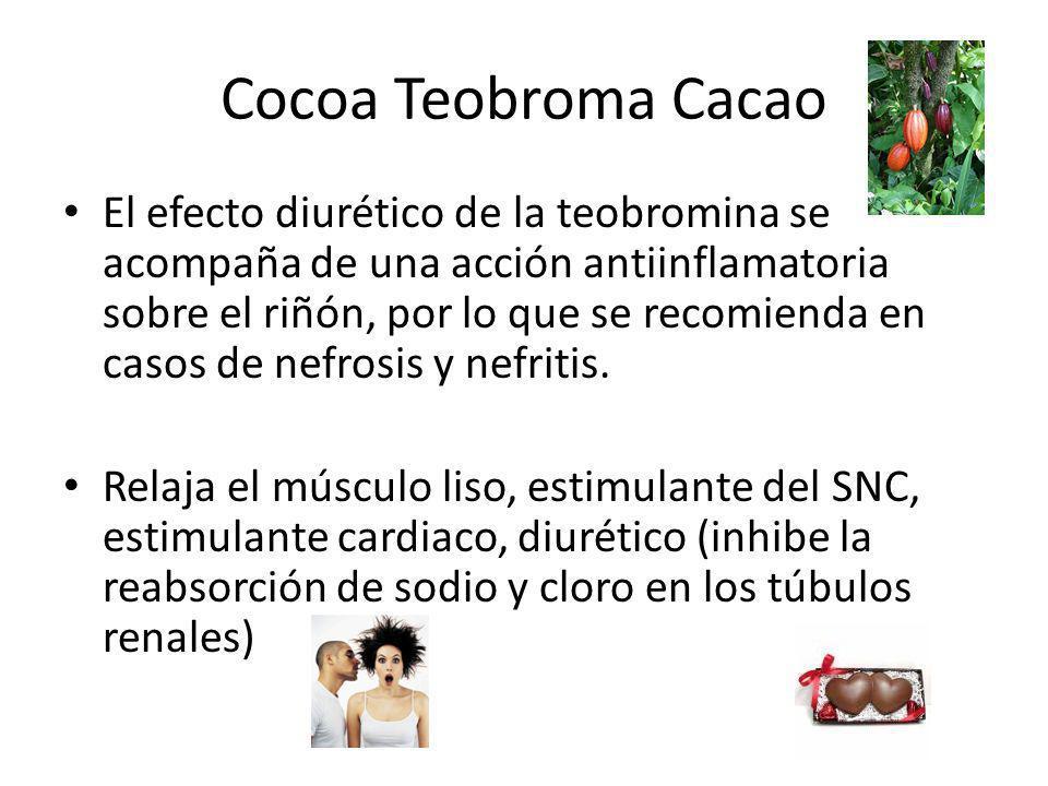Cocoa Teobroma Cacao El efecto diurético de la teobromina se acompaña de una acción antiinflamatoria sobre el riñón, por lo que se recomienda en casos