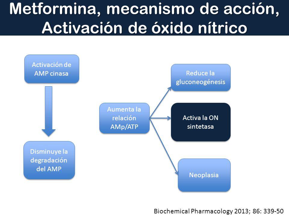 Metformina, mecanismo de acción, Activación de óxido nítrico Activación de AMP cinasa Disminuye la degradación del AMP Aumenta la relación AMp/ATP Red