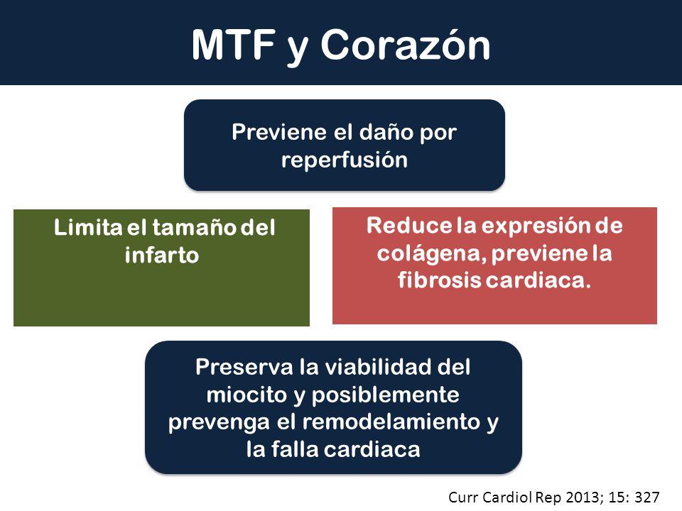 Limita el tamaño del infarto Reduce la expresión de colágena, previene la fibrosis cardiaca. Previene el daño por reperfusión MTF y Corazón Preserva l
