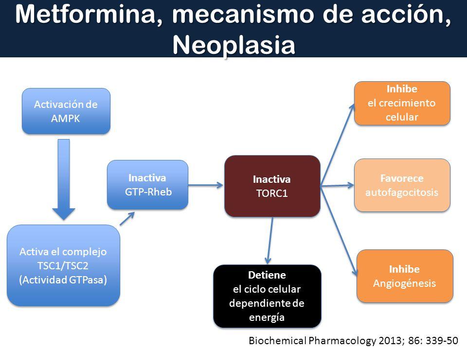 Metformina, mecanismo de acción, Neoplasia Activación de AMPK Activa el complejo TSC1/TSC2 (Actividad GTPasa) Activa el complejo TSC1/TSC2 (Actividad