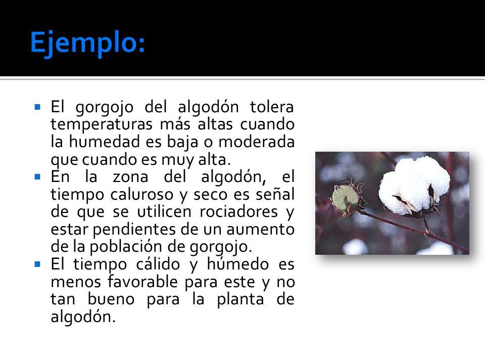 El gorgojo del algodón tolera temperaturas más altas cuando la humedad es baja o moderada que cuando es muy alta.