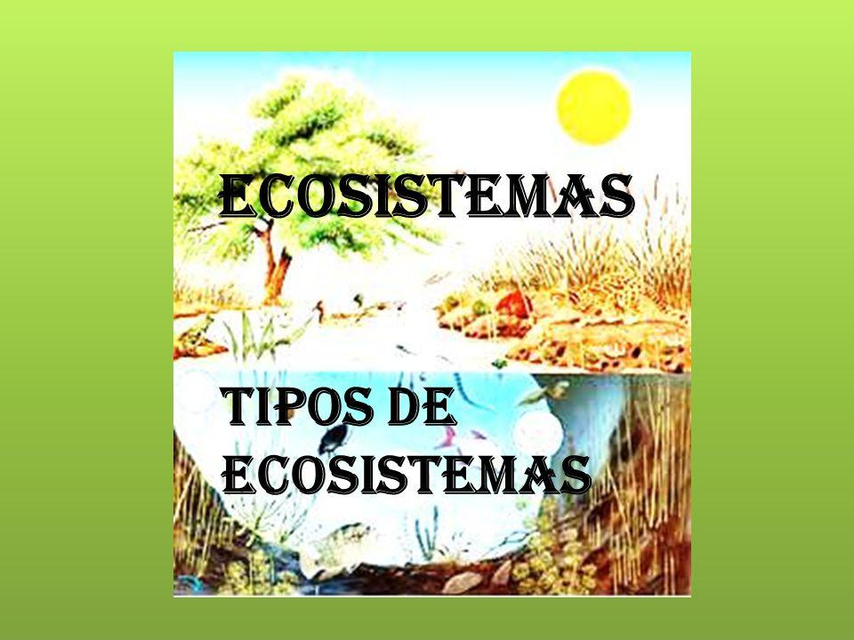 Un ecosistema es un conjunto de organismos naturales El ecosistema surgió en 1930 por Roy Clapham y Arthur Tansley