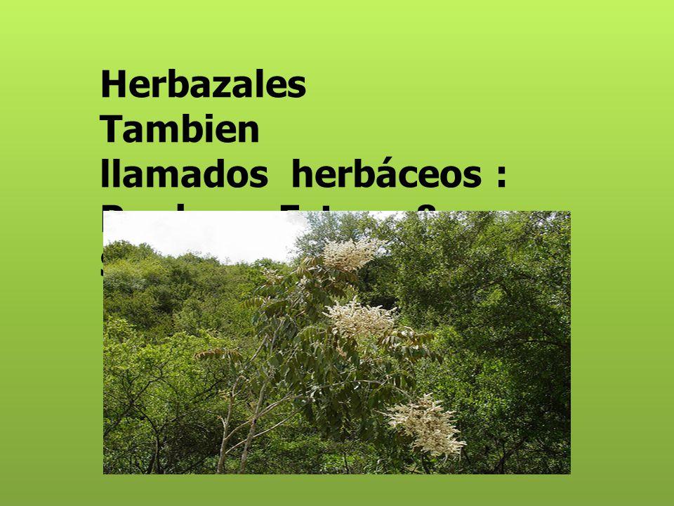 Tundra está conformada por musgos, líquenes, hierbas y pequeños arbustosmusgoslíquenes