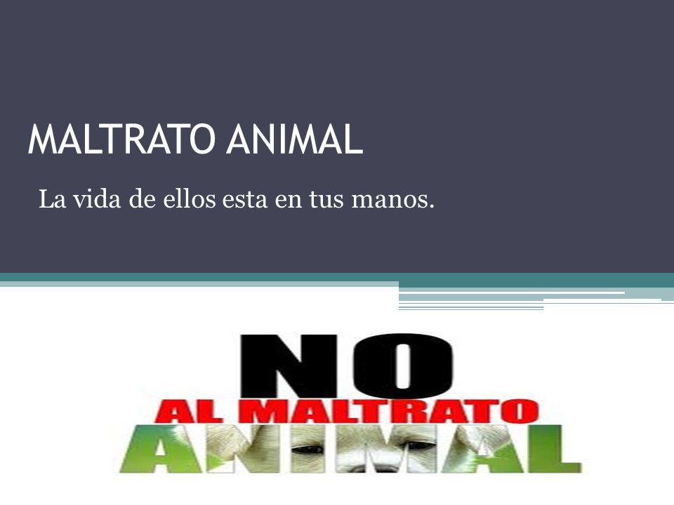 MALTRATO ANIMAL La vida de ellos esta en tus manos.