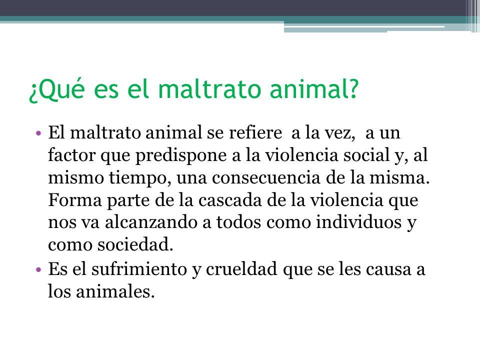 ¿Qué es el maltrato animal.