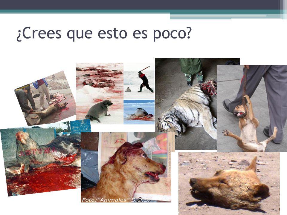 ¿Cómo se puede evitar.Por medio de campañas que ayuden al cuidado de los animales.
