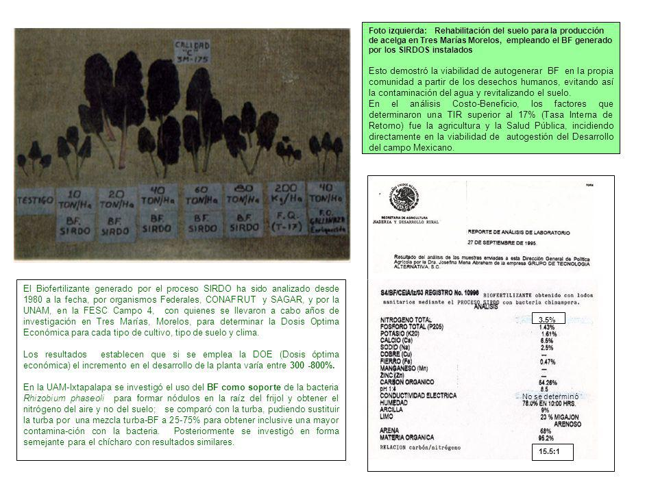 Foto izquierda: Rehabilitación del suelo para la producción de acelga en Tres Marías Morelos, empleando el BF generado por los SIRDOS instalados Esto