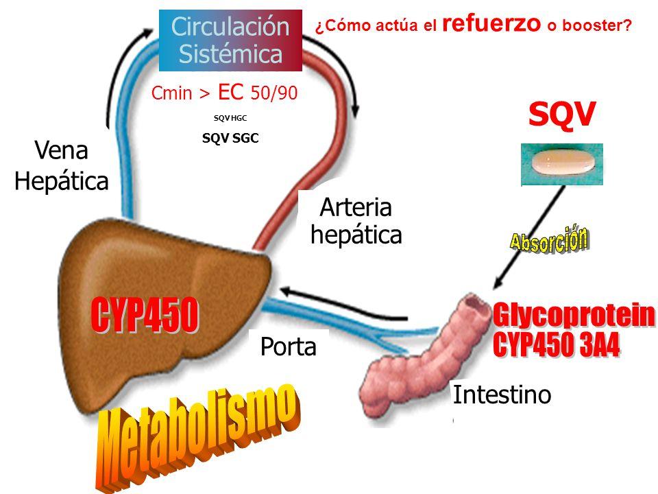 Arteria hepática Circulación Sistémica Intestino Cmin > EC 50/90 SQV SQV HGC SQV SGC Porta Vena Hepática ¿Cómo actúa el refuerzo o booster?