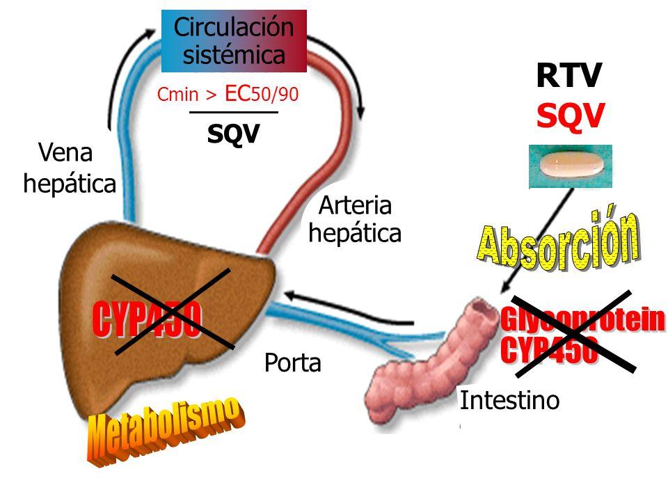 Arteria hepática Circulación sistémica Vena hepática Porta Intestino Cmin > EC 50/90 SQV SQV HGC SQV SGC RTV SQV