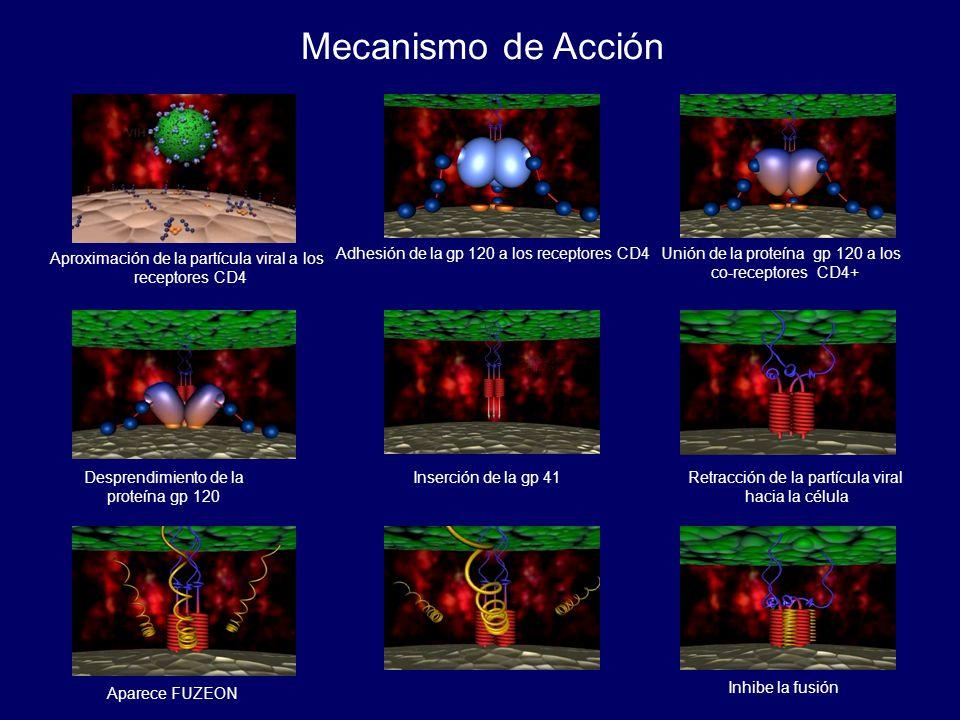Aproximación de la partícula viral a los receptores CD4 Adhesión de la gp 120 a los receptores CD4Unión de la proteína gp 120 a los co-receptores CD4+