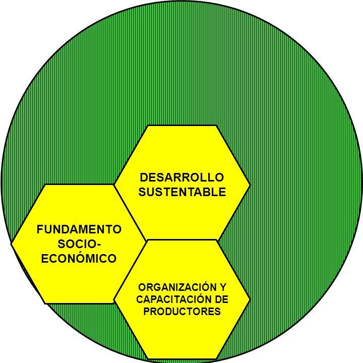 DESARROLLO SUSTENTABLE FUNDAMENTO SOCIO- ECONÓMICO ORGANIZACIÓN Y CAPACITACIÓN DE PRODUCTORES