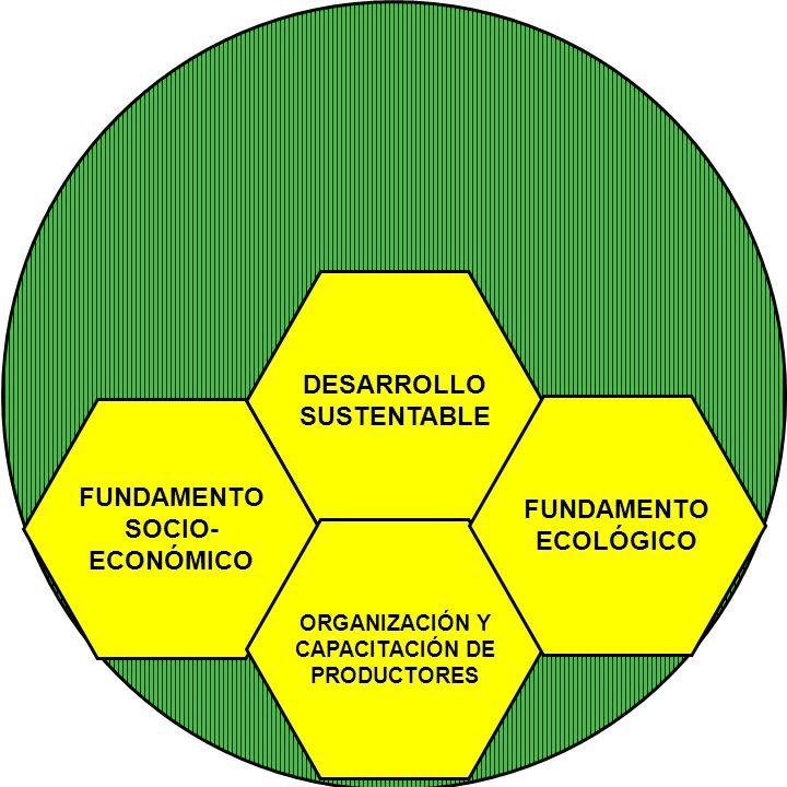 DESARROLLO SUSTENTABLE FUNDAMENTO SOCIO- ECONÓMICO ORGANIZACIÓN Y CAPACITACIÓN DE PRODUCTORES FUNDAMENTO ECOLÓGICO