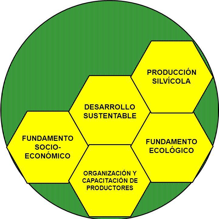 DESARROLLO SUSTENTABLE FUNDAMENTO SOCIO- ECONÓMICO ORGANIZACIÓN Y CAPACITACIÓN DE PRODUCTORES FUNDAMENTO ECOLÓGICO PRODUCCIÓN SILVÍCOLA