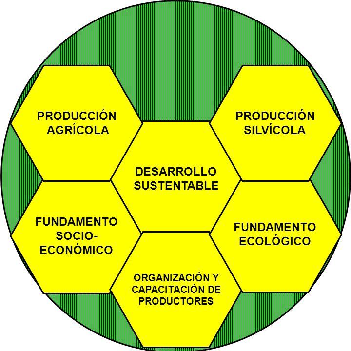 DESARROLLO SUSTENTABLE FUNDAMENTO SOCIO- ECONÓMICO ORGANIZACIÓN Y CAPACITACIÓN DE PRODUCTORES FUNDAMENTO ECOLÓGICO PRODUCCIÓN SILVÍCOLA PRODUCCIÓN AGR