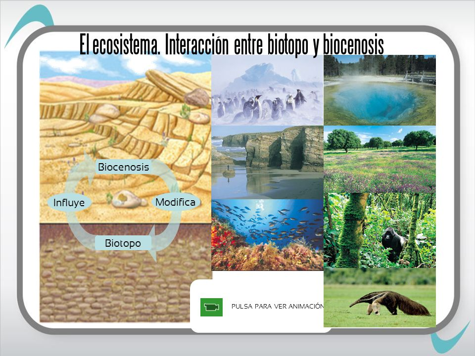 PULSA PARA VER ANIMACIÓN Biocenosis Influye Biotopo Modifica El ecosistema.