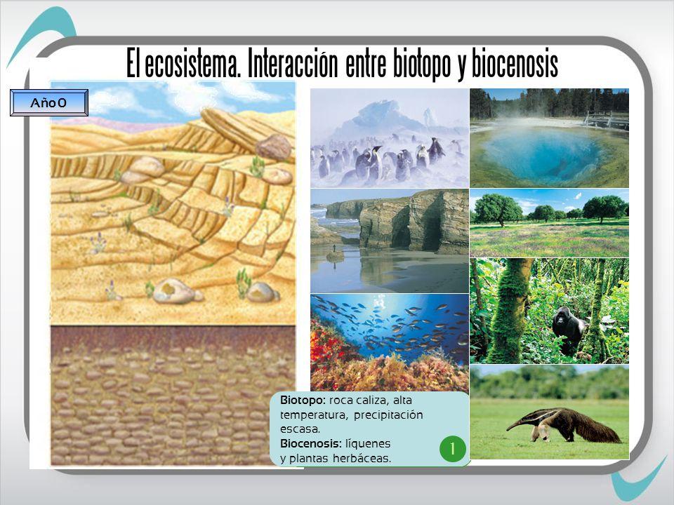 VOLVER Biotopo: suelo fértil y clima húmedo.Biocenosis: bosque.