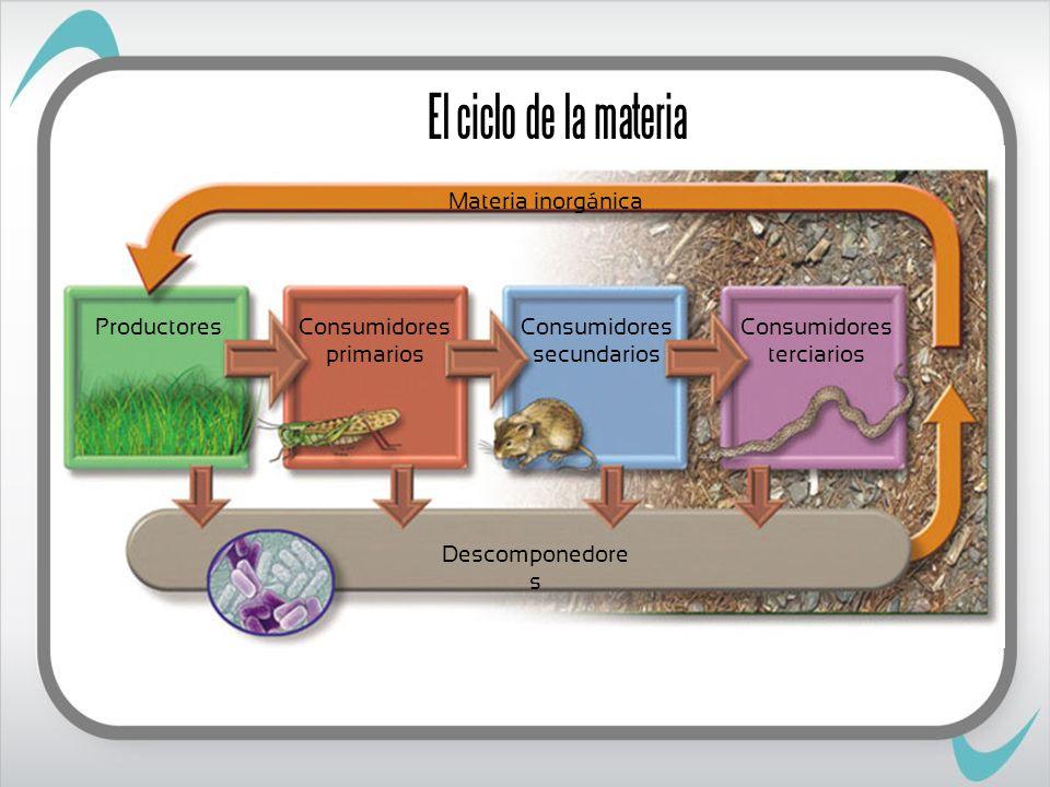 El ciclo de la materia ProductoresConsumidores primarios Consumidores secundarios Consumidores terciarios Materia inorgánica Descomponedore s