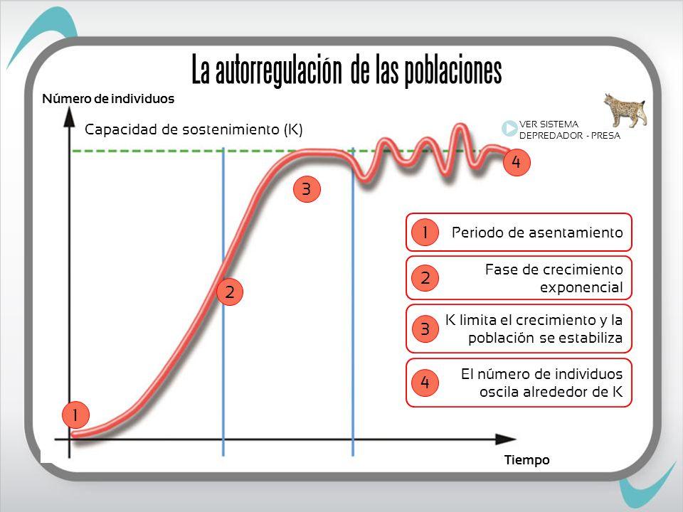 Número de individuos Tiempo Capacidad de sostenimiento (K) 1 2 3 4 VER SISTEMA DEPREDADOR - PRESA Periodo de asentamiento 1 Fase de crecimiento exponencial 2 K limita el crecimiento y la población se estabiliza 3 El número de individuos oscila alrededor de K 4 La autorregulación de las poblaciones