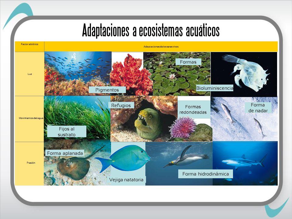 Formas redondeadas Adaptaciones a ecosistemas acuáticos Adaptaciones de los seres vivos Factor abiótico Presión Movimientos del agua Luz Bioluminiscencia Pigmentos Formas Forma de nadar Fijos al sustrato Refugios Forma aplanada Forma hidrodinámica Vejiga natatoria