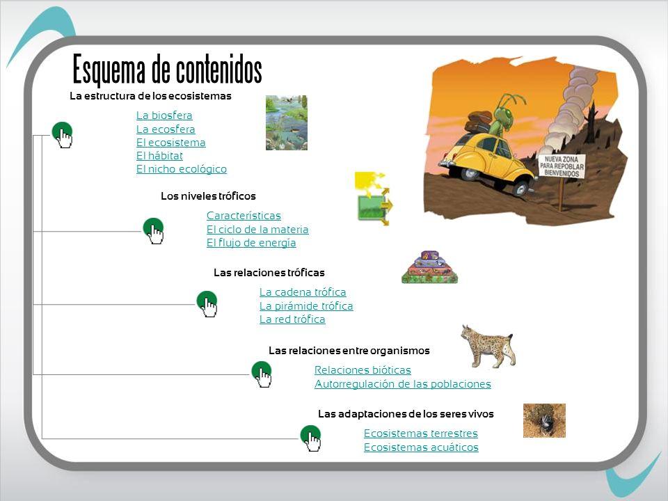 Los niveles tróficos Los productores Los consumidores Los descomponedores Primarios Secundarios Terciarios Hongos Bacterias