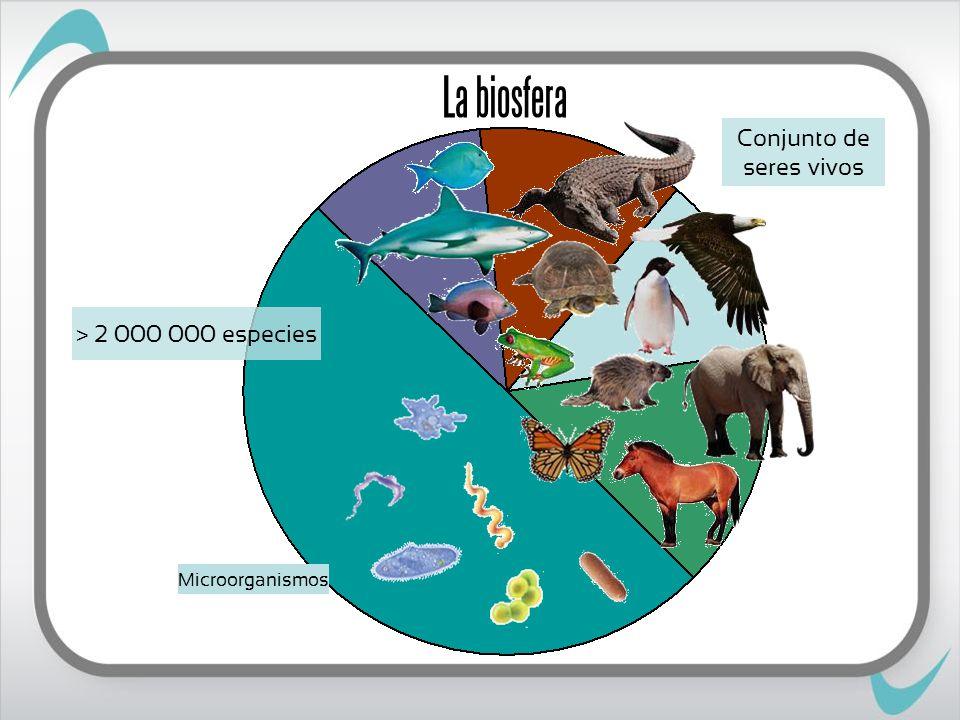 La biosfera > 2 000 000 especies Microorganismos Conjunto de seres vivos