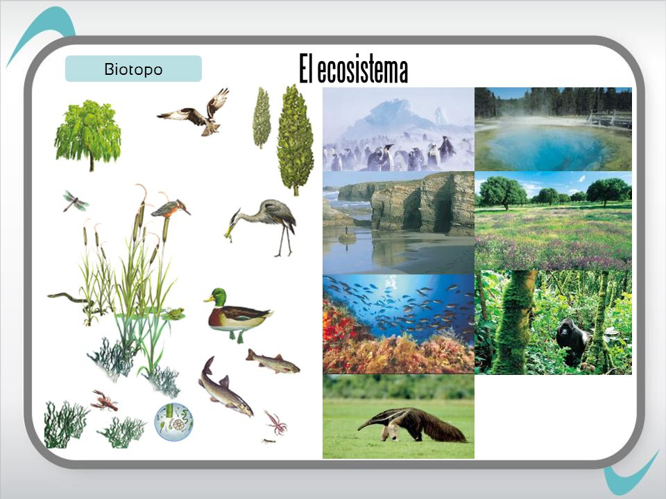 Biotopo El ecosistema