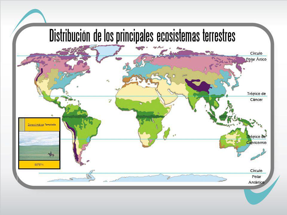 Trópico de Cáncer Trópico de Capricornio ESTEPA Zona climática: Templada Círculo Polar Ártico Círculo Polar Antártico Distribución de los principales ecosistemas terrestres