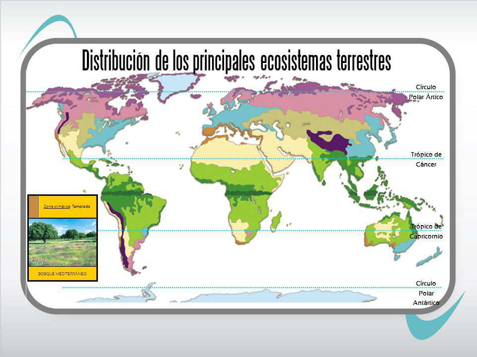 Trópico de Cáncer Trópico de Capricornio BOSQUE MEDITERRÁNEO Zona climática: Templada Círculo Polar Ártico Círculo Polar Antártico Distribución de los principales ecosistemas terrestres