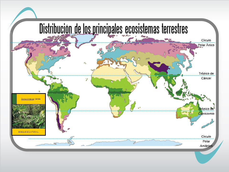 Trópico de Cáncer Trópico de Capricornio BOSQUE ECUATORIAL Zona climática: Cálida Círculo Polar Ártico Círculo Polar Antártico Distribución de los principales ecosistemas terrestres