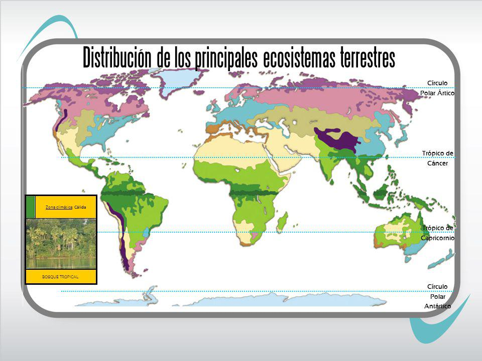 Trópico de Cáncer Trópico de Capricornio BOSQUE TROPICAL Zona climática: Cálida Círculo Polar Ártico Círculo Polar Antártico Distribución de los principales ecosistemas terrestres