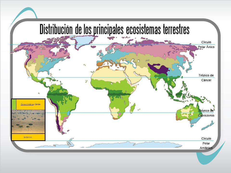 Trópico de Cáncer Trópico de Capricornio SABANA Zona climática: Cálida Círculo Polar Ártico Círculo Polar Antártico Distribución de los principales ecosistemas terrestres